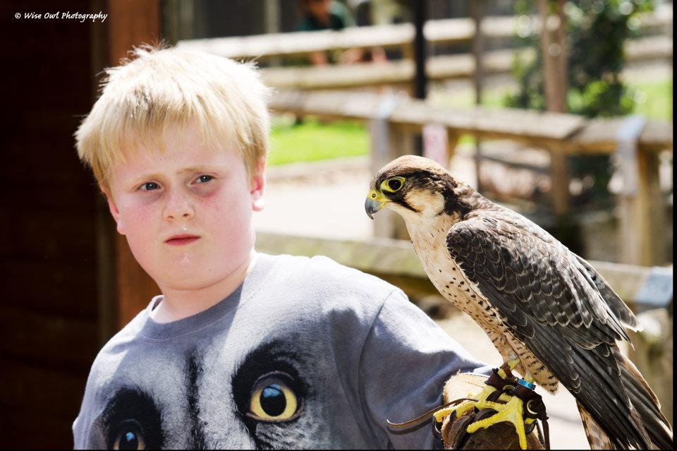 Lanner Falcon 1 with Junior Handler Harry