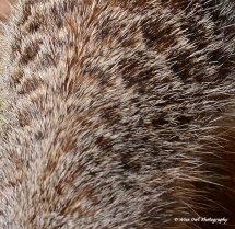 Meerkat Fur