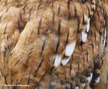 Tawny Owl Feathers
