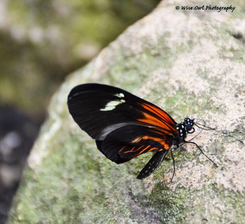 Unidentified Butterfly 3