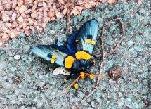 Unidentified Butterfly 7