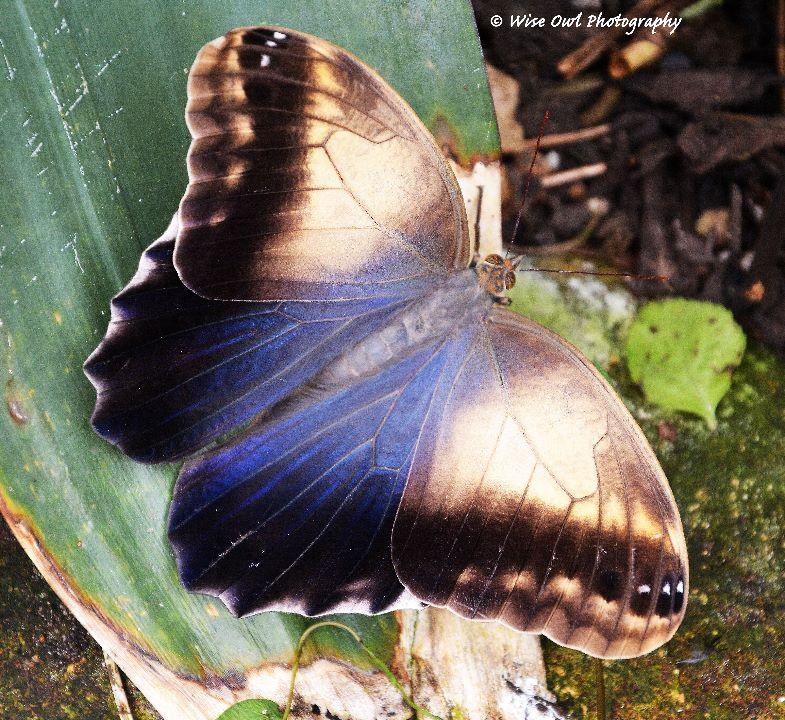 Unidentified Butterfly 8