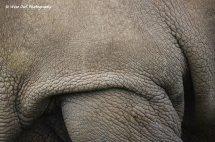 White Rhino Hide