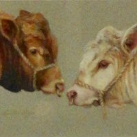 Autumn 2017 - Cynthia Lloyd - Limousin and Charolais Bulls