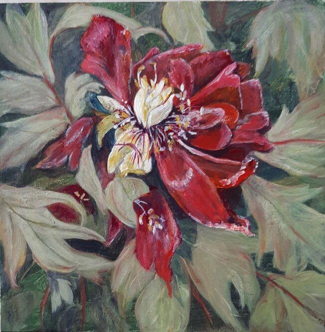 Fading glory (Tree Peony) – Sue Hinton
