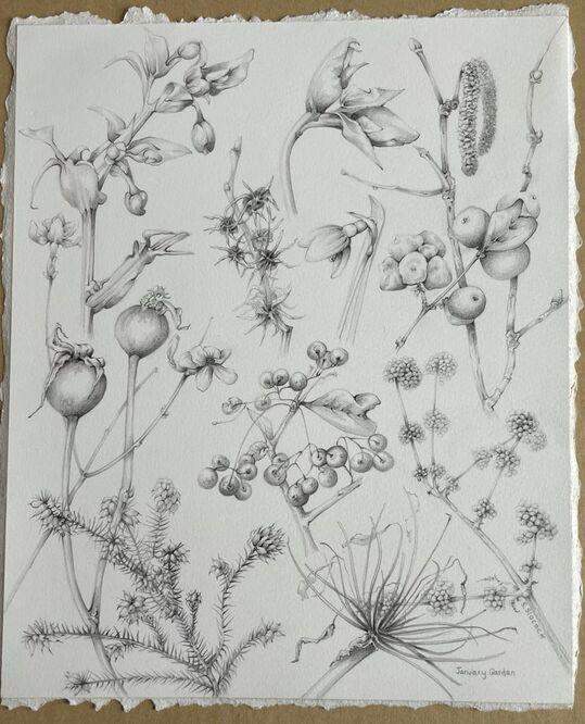 January Garden - Shirley Slocock