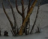 Thawing Birches