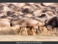 2 Migration Motion