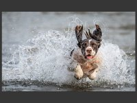 2 Sea Dog by Mark Clayton