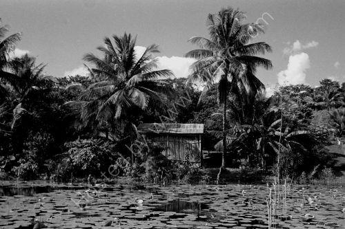 Lago Peten - Nr Flores