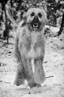 Hundespielgruppe 30.11.2013
