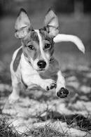 Hundespielgruppe 07.12.2013
