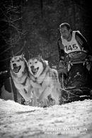 Schlittenhundesport
