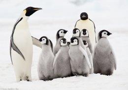 Antàrtida / Antarctica