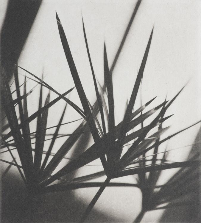 Fern Noir - Polymer Photogravure Print
