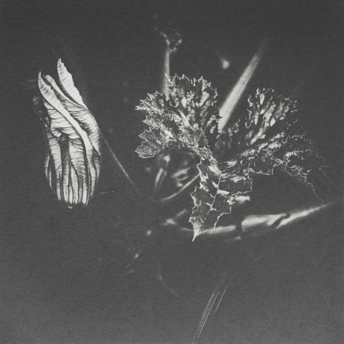 Flowering Courgette - Polymer Photogravure Print