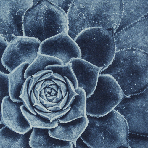 Succulent Detail - Polymer Photogravure Print