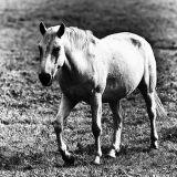 annaghmakerrig horse