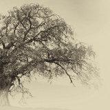 arterial tree