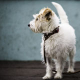 strandhill dog