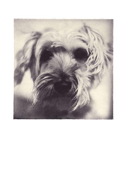 Strandhill Terrier