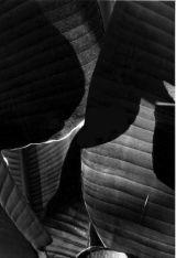 Kew Gardens, leaf 2