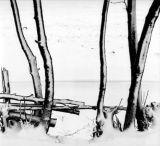 tree snowscape 3