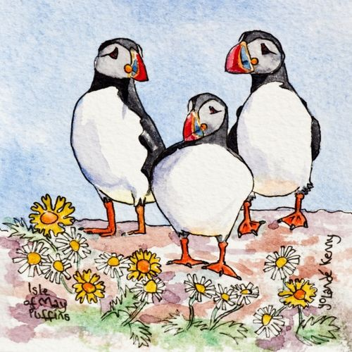 3 Isle of May Puffins ... £20