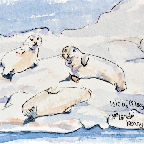 Seals on The Isle of May ... £20