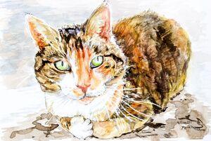 Commission Kitten