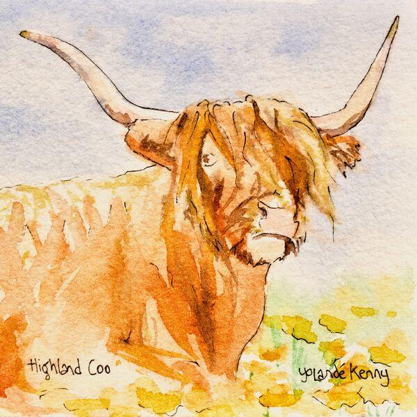 Print 'Highland Coo'... £22