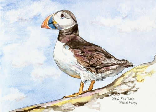 Print 'Isle of May Puffin in Profile'... £22