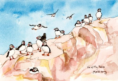 Print 'Puffins on the Isle of May Cliffs'... £22