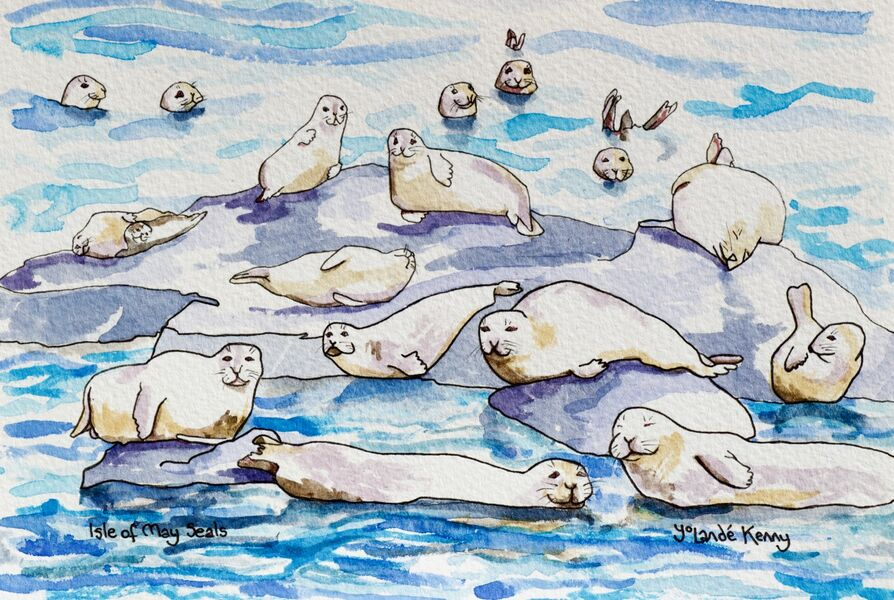 Signed and Limited Edition Print of The Isle of May Seals