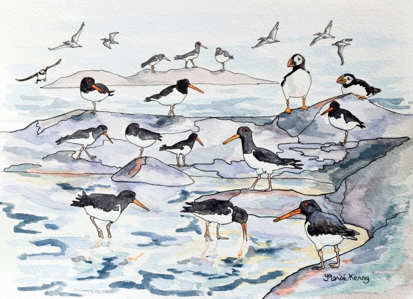 Signed and Limited Edition Print of The Isle of May Oystercatchers and Puffins