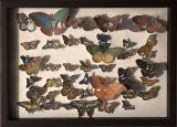 eternal butterfly