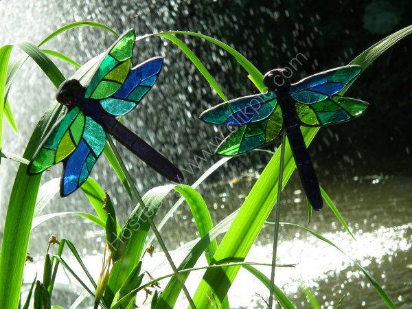 Pot plant dragonfly