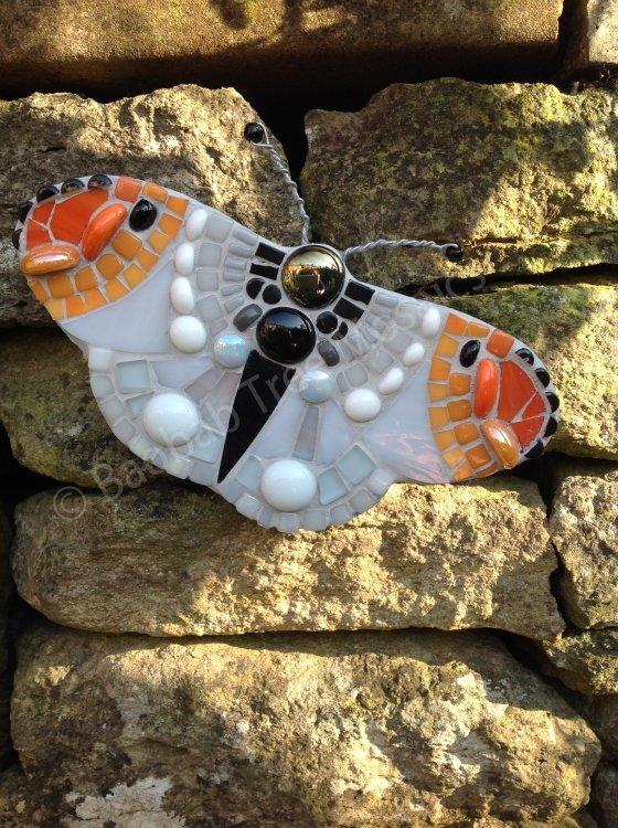 Orange tipped butterflies