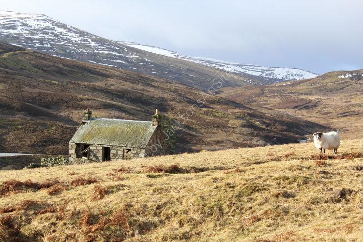 Cottage, Glen Quaich.