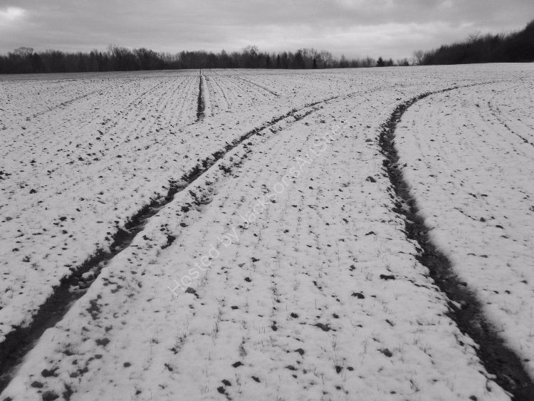 Field lines III, near Old Gallows Road.