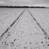 Field lines II, near Old Gallows Road.