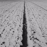 Field lines IV, near Old Gallows Road.