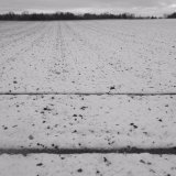 Field lines I, near Old Gallows Road.