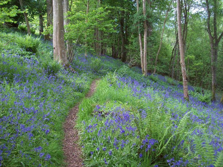 In the Bluebell Wood.