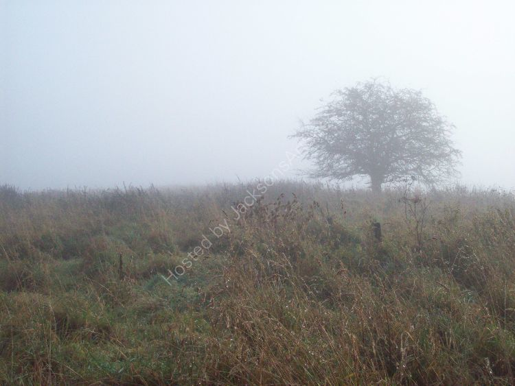 Misty morning, The May Tree.
