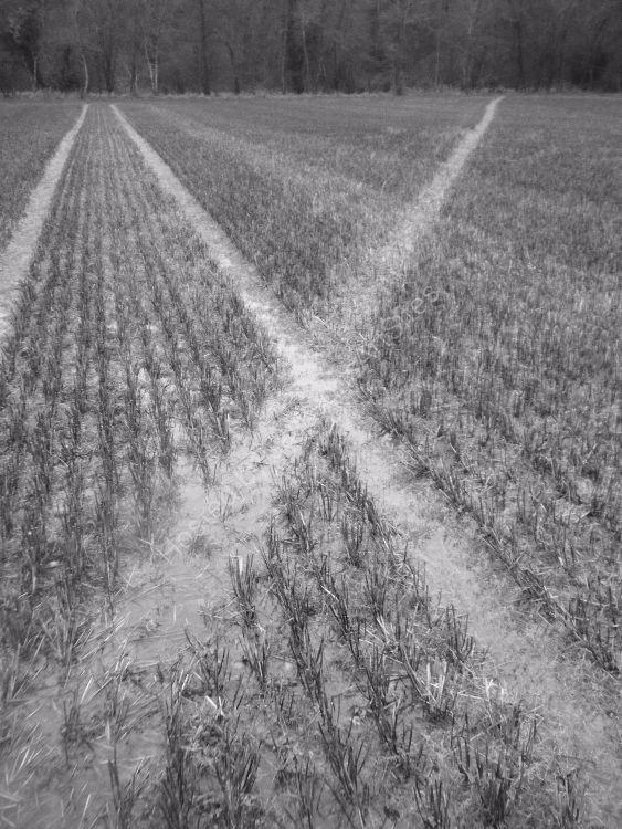 Sodden stubble field.