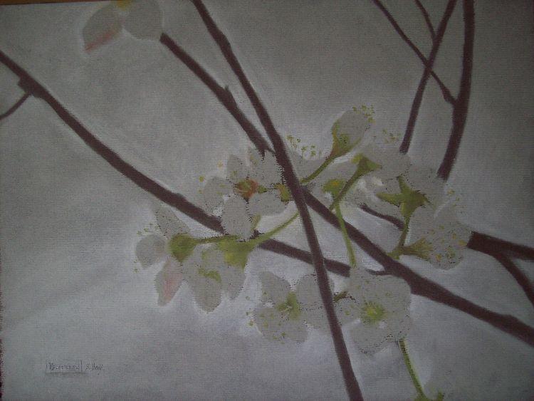 Spring blossom.  Pastel.  40cm x 30.5cm.  SOLD.