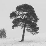 Winter, The Sma' Glen