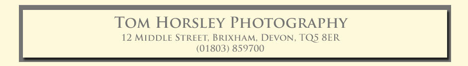 Tom Horsley Photography - Dog Photography Torbay